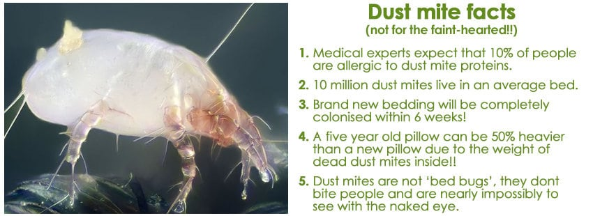 5-reasons-dust-mite-facts