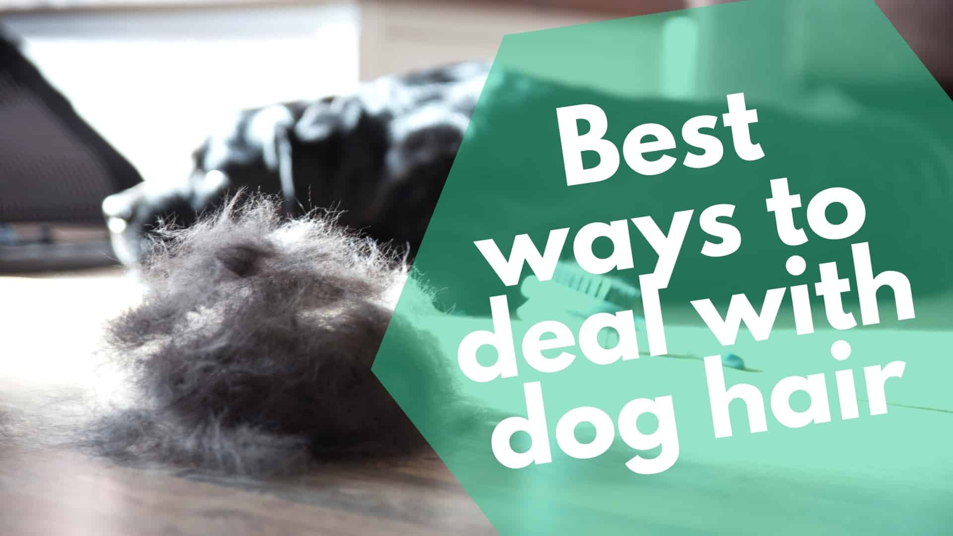 Best ways to deal with dog hair