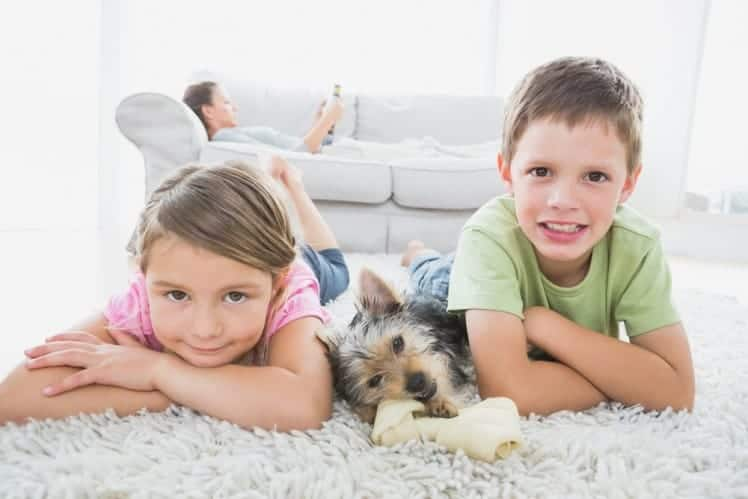 kids-and-dog-dry-carpet-cleaning